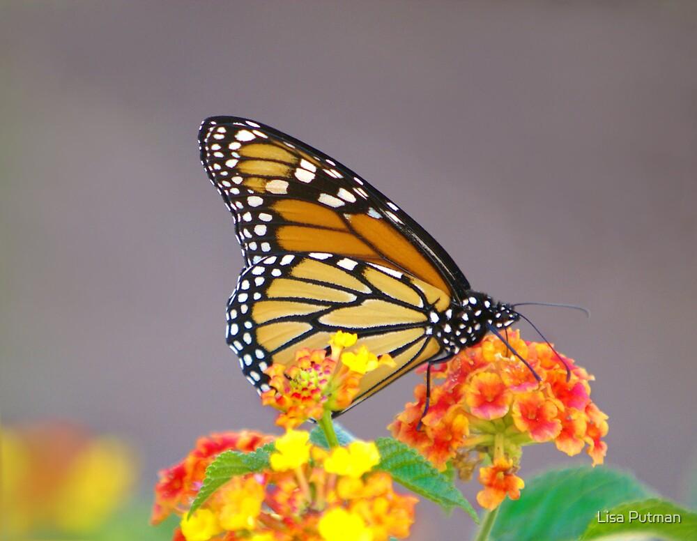 Autumn Monarch by Lisa G. Putman