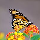 Autumn Monarch by Lisa G. Putman