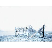 winter wine Photographic Print