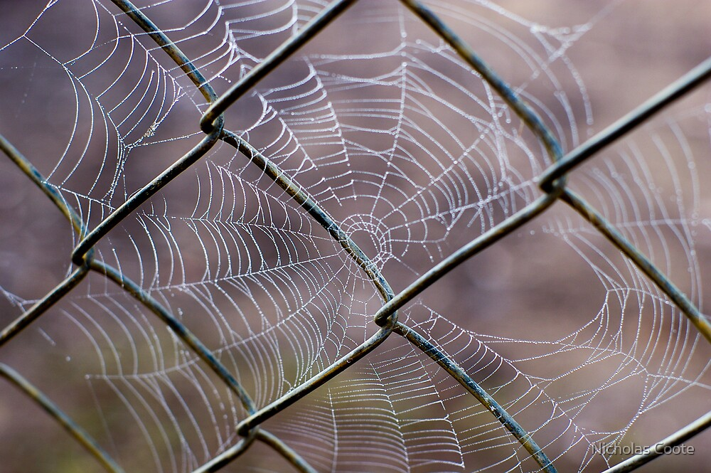 Web of Intrigue by Nicholas Coote