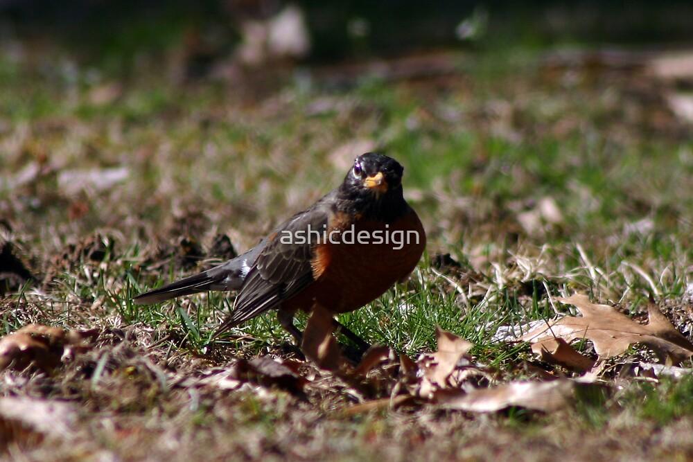 Bird by ashicdesign