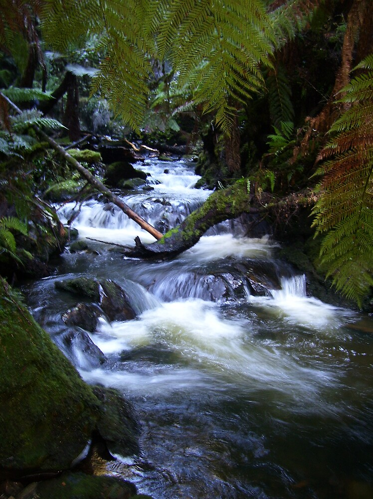 creek near Waratah, Tasmania  by gaylene