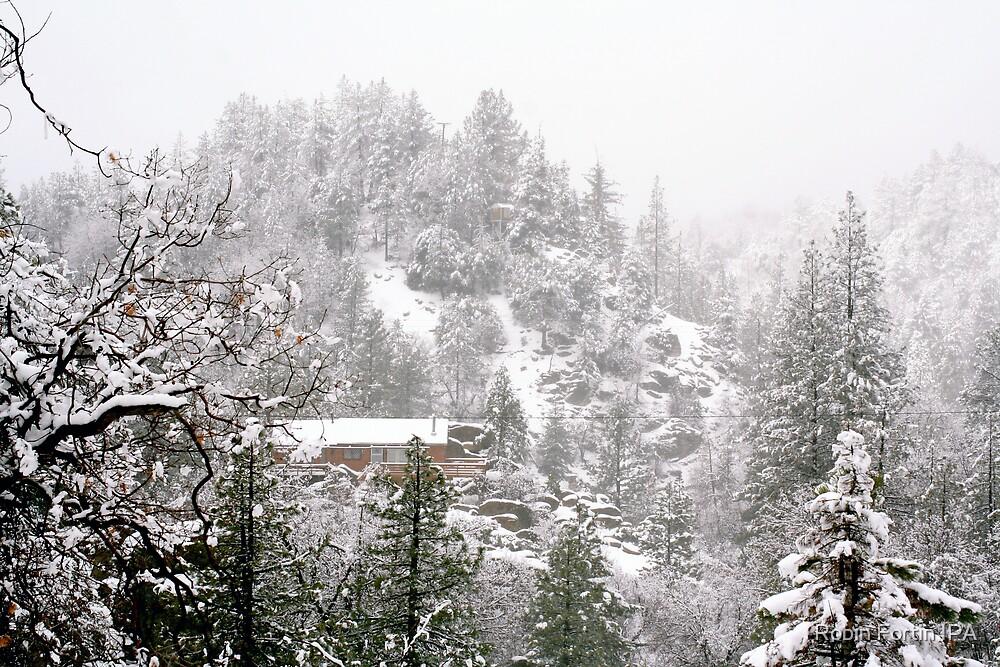 Big Bear Snow by Robin Fortin IPA