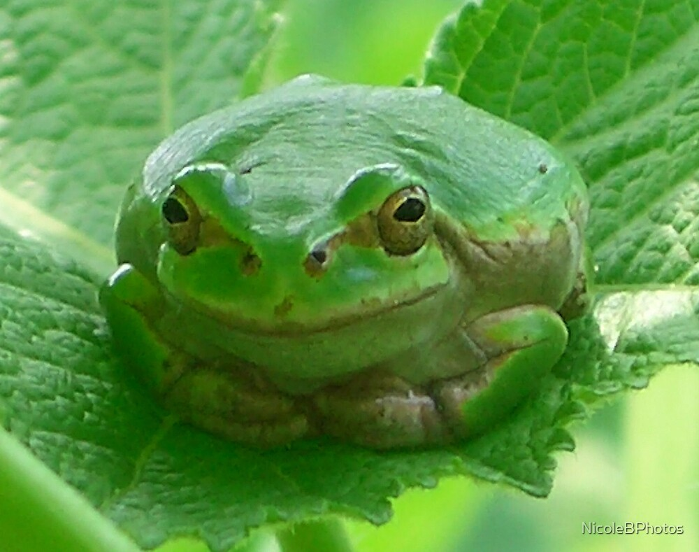 Smile - green frog close-up by NicoleBPhotos