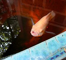 A fish I met  in Thailand by rbilks