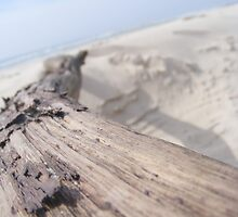 Driftwood by colbychristie