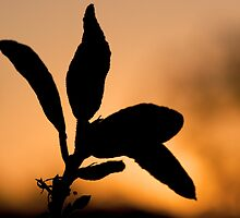 Afternoon Silhouette  by Sam Hegarty