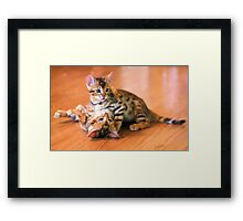 Bengal Kittens at Play Framed Print
