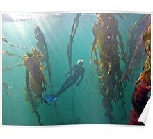 Mermaid Sighting Poster