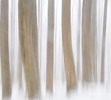 cold trees in the smokies by dc witmer
