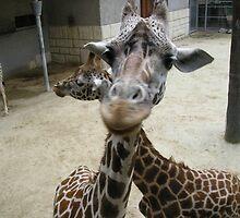 Giraffe by Sam Riggs