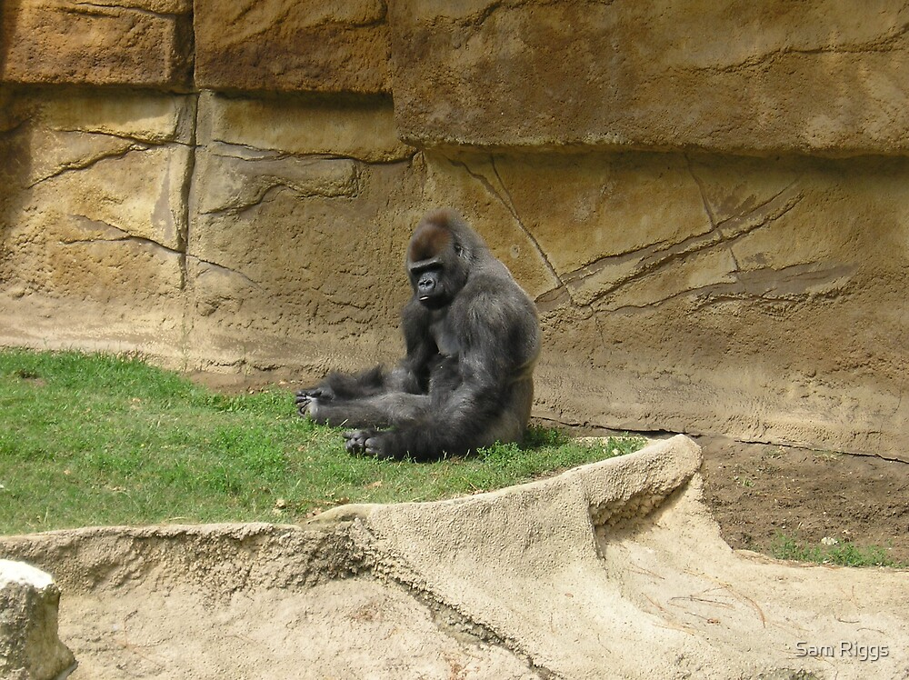 Gorilla by Sam Riggs
