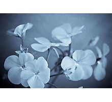 Newtown Blooms Photographic Print