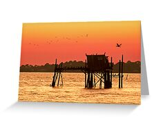 cormorant condo Greeting Card