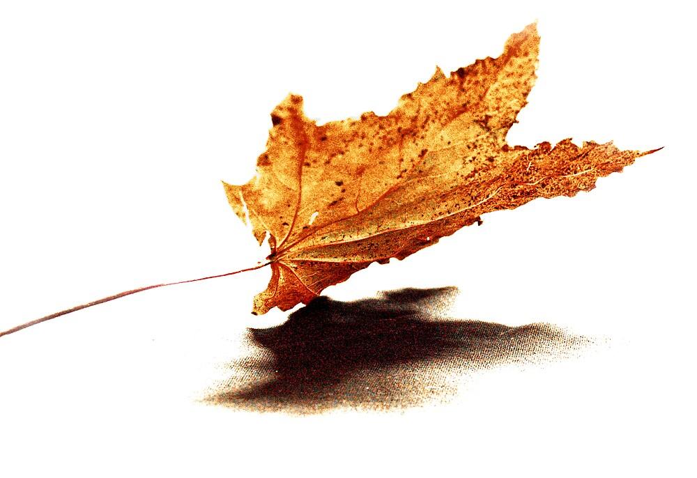 """Falling """"Fall"""" by Daniela Reynoso Orozco"""