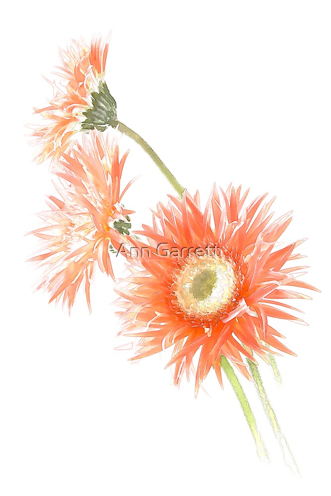 Frilly Gerbera Art by Ann Garrett