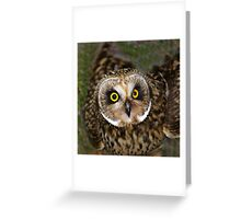 Short-eared Owl: Intensive-Eyed Greeting Card
