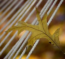 Leaf on a Rope by Bahoke