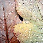Water on leaves by morrigan