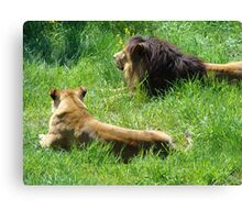 Male and female lions Canvas Print