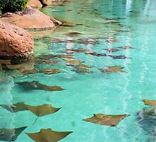 Stingray Pond at the Atlantis by Jane Girardot