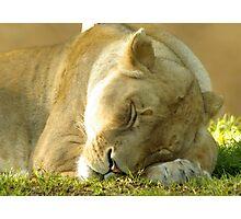 Sleeping beauty. Photographic Print