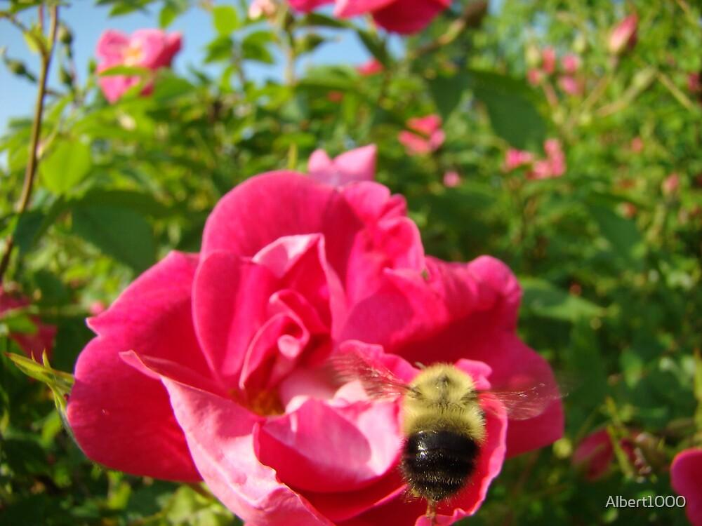 Bee in flight by Albert1000