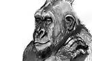 Gorilla Drawing #3 by WoolleyWorld