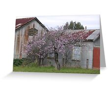 Sheds and Cherry Blossoms Greeting Card