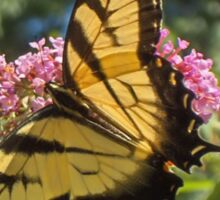 Eastern Tiger Swallowtail Butterfly Closeup Photography  Sticker