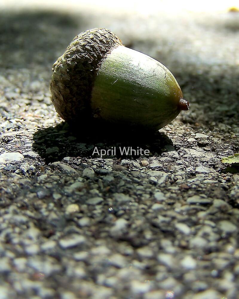 Acorn DoF by xPressiveImages