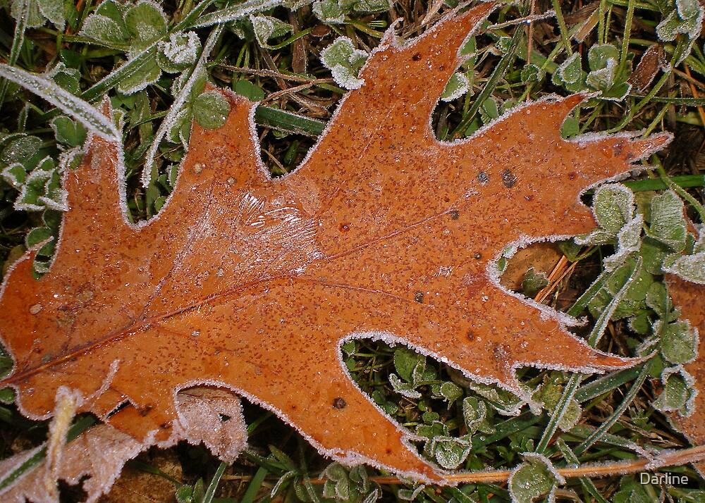 Frosty Morning by Darline
