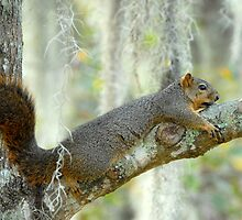 Chillin' by Bonnie T.  Barry