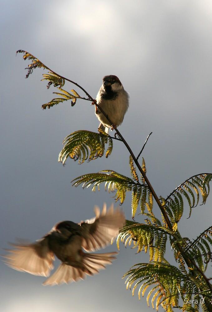 Sparrows by Sara B
