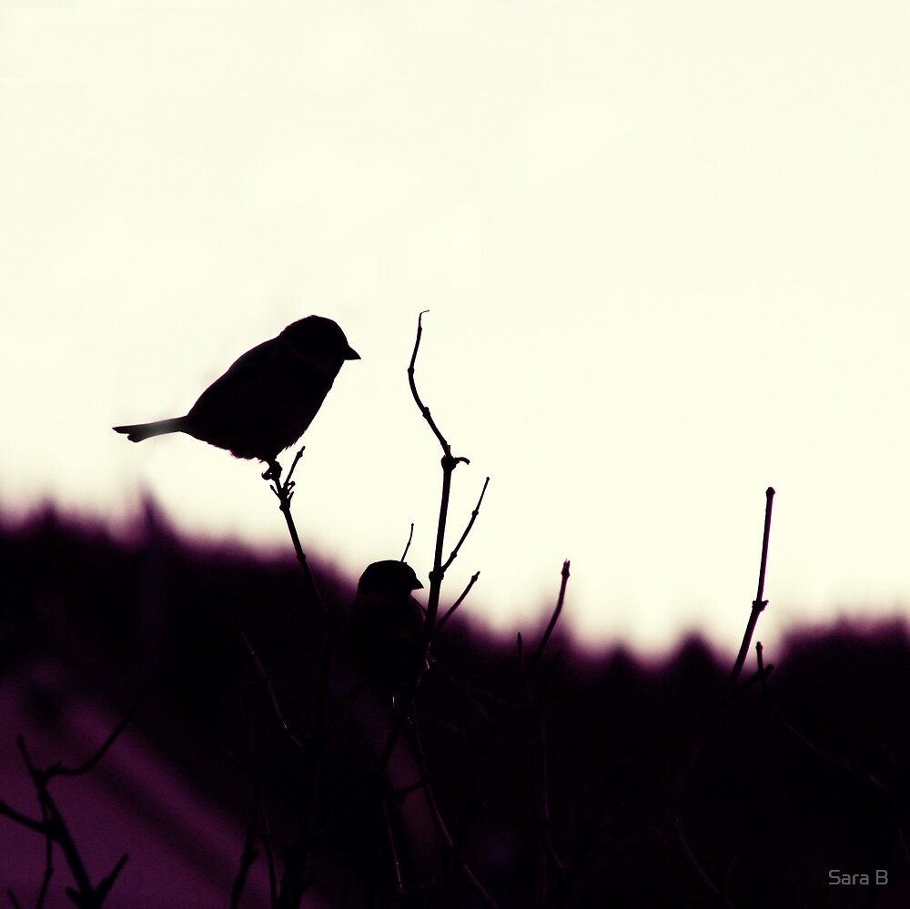 Sparrow Silhouette by Sara B