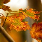 Autumn leaves 4 by indiafrank