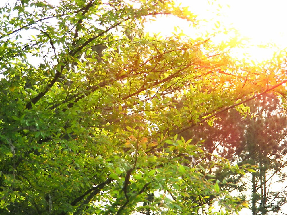 sun stretching by Tia  Fox