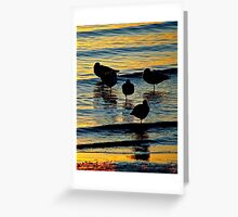Silhouetted Gulls Greeting Card