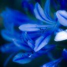 Full Bloom by Sarah Moore