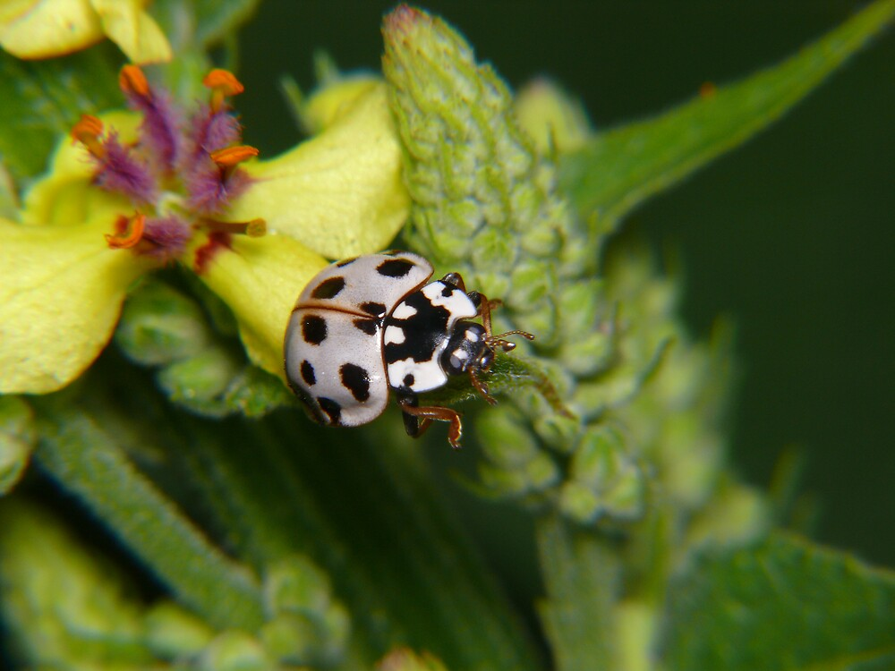 Ladybug, Ladybug, where do you go? by Geoffrey