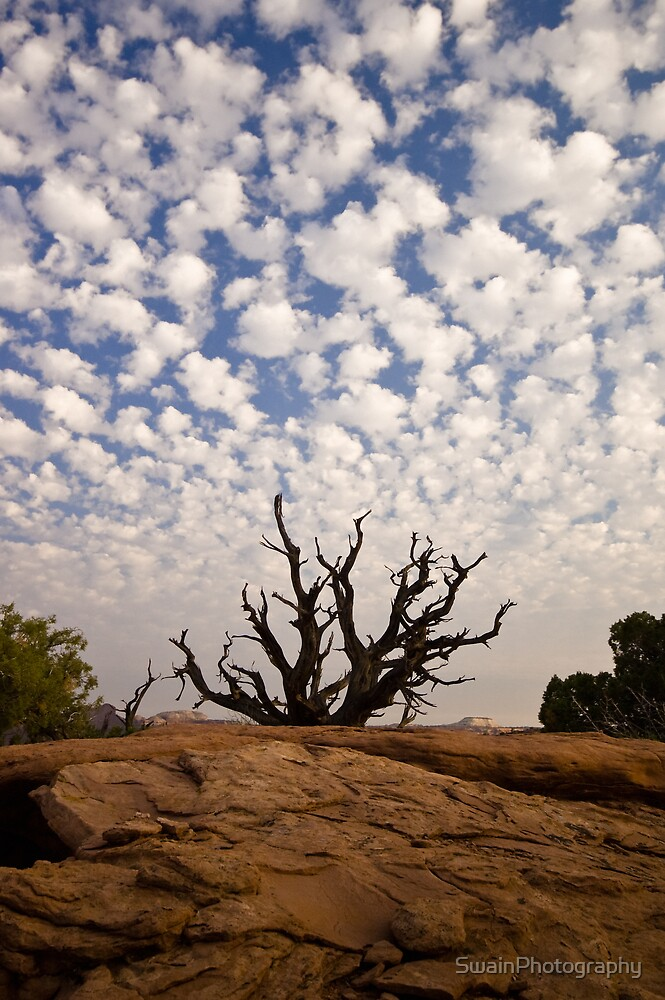 Dead Tree 1 by SwainPhotography
