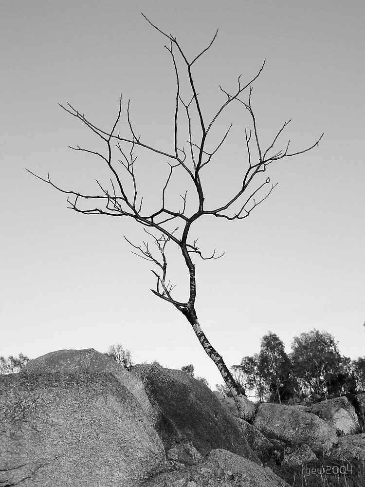 Reaching Twig by Greg Halliday