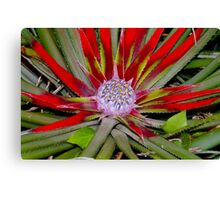 Sea Holly Canvas Print