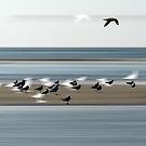 seagull by dominiquelandau