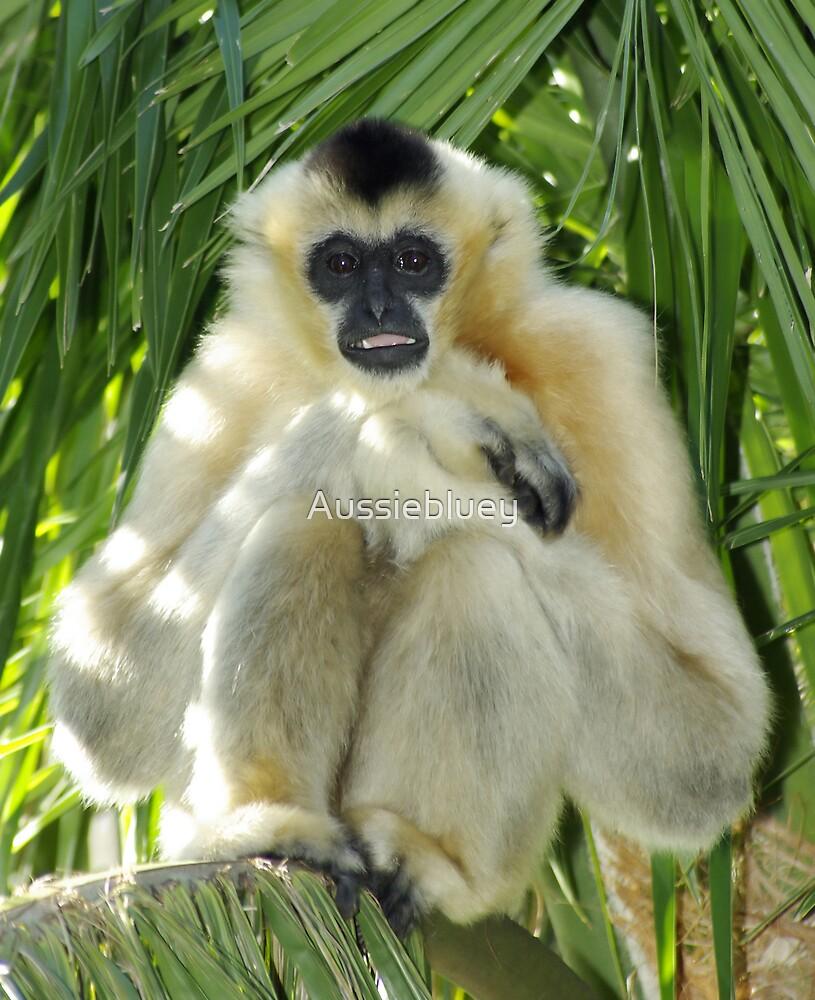 Female White Cheek Gibbon. by Aussiebluey