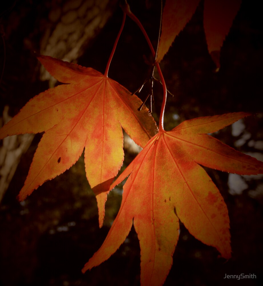 leaves by JennySmith