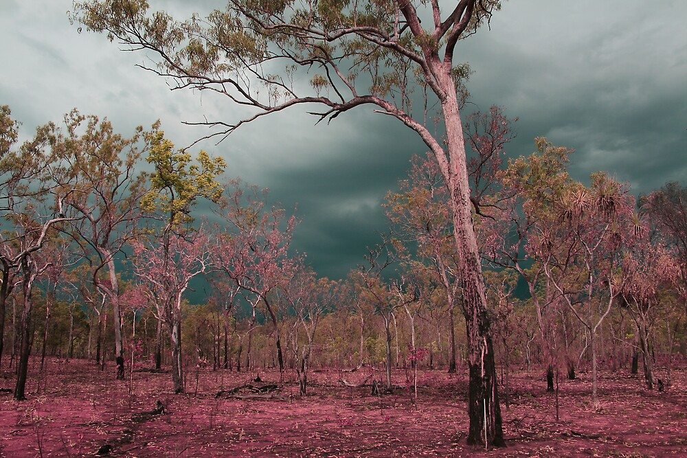 Pink by Kym Smitt