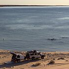Pelican, Defender, Sand, Sea by robertp
