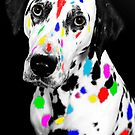 Multi-coloured Dalmatian by Vincent Abbey
