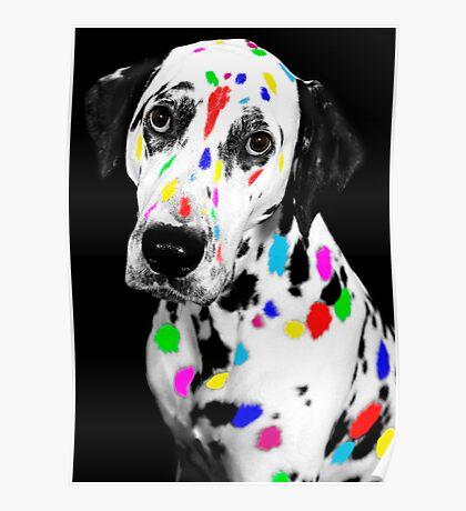 Multi-coloured Dalmatian Poster
